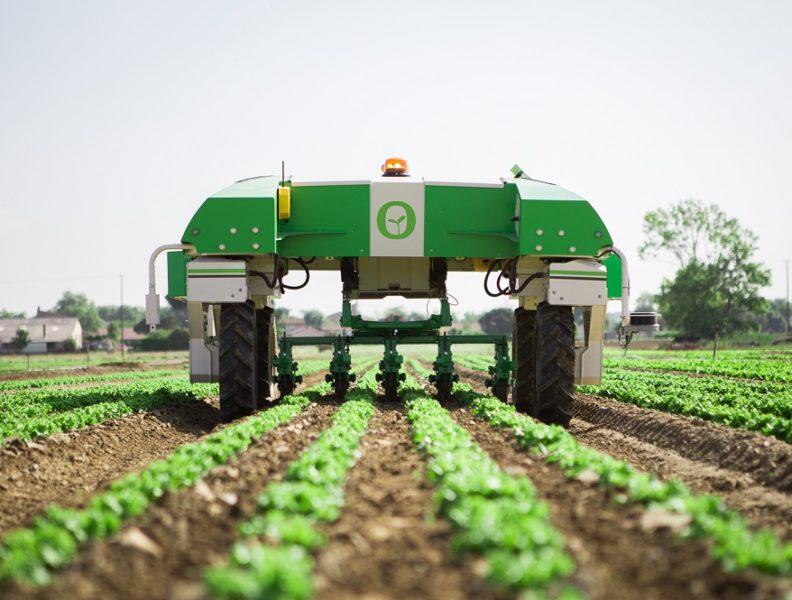 Tarım İnovasyonu – Domates Kolay Yetişmiyor